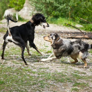 Lekarz weterynarii: sylwestrowe hałasy niepokoją zarówno psy, jak i koty