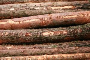 Holandia polskim drewnem stoi