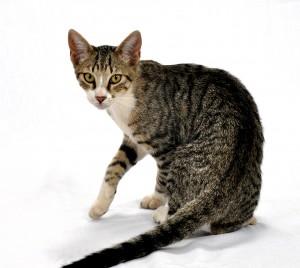 Mieszkasz w Holandii? Spraw sobie kota!