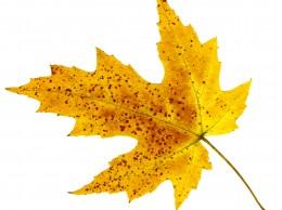 Wtorek pierwszym dniem astronomicznej jesieni